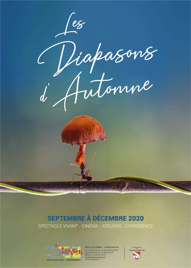LES DIAPASONS D AUTOMNE.jpg - Visionneuse de photos Windows